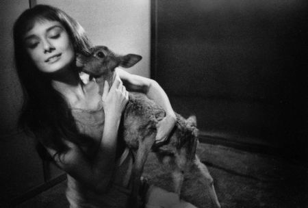 Фотографии Willoughby - Audrey Hepburn and deer