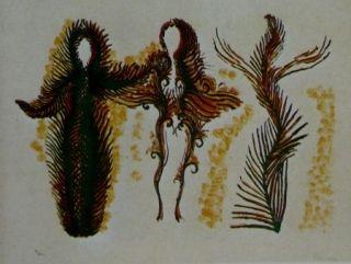 Литография Fenosa - Femmes lianes