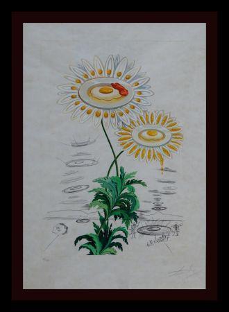 Гравюра Dali - Flora Dalinae Chrysanthemum