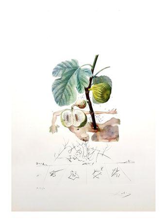 Литография Dali - Flordali - Homme Figuier
