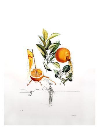 Литография Dali - Flordali - Orange Erotique