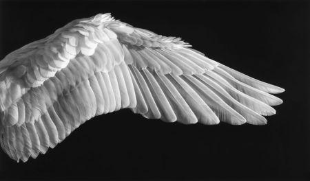 Фотографии Longo - Gabriel'S Wing