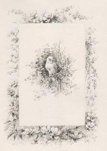 Иллюстрированная Книга Giacomelli - Histoire d'un merle blanc. Compositions de Hector Giacomelli gravées à l'eau-forte par L. Buisson.