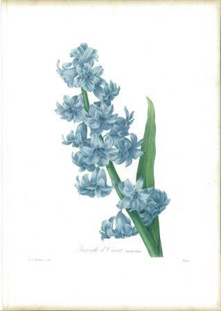 Офорт Redouté - Jacinthe d'orient (variété bleue)