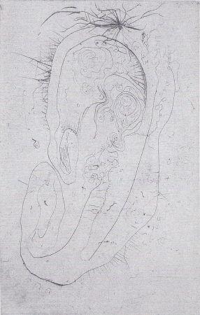 Иллюстрированная Книга Wols - Naturelles