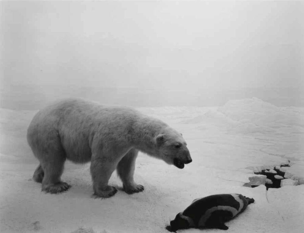 Литография Sugimoto - Polar Bear