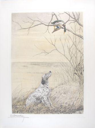 Гравюра Danchin - Setter et Canard branche - English Setter and Duck in a tree (Original)