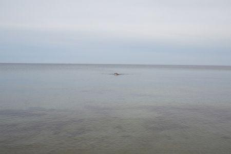 Нет Никаких Технических Teller - Swimming, Glemmingebro, Sweden 2015