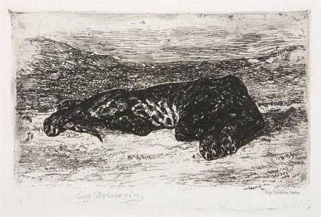 Гравюра Delacroix - Tigre couché dans le désert