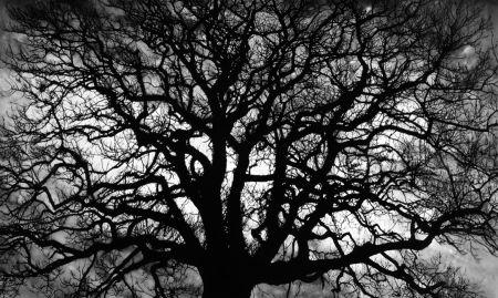 Многоэкземплярное Произведение Longo - Untitled (Tree)
